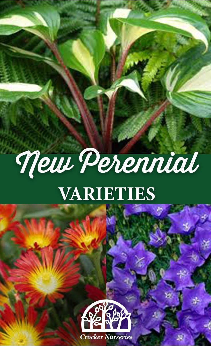 New Perennial Varieties - Crocker Nurseries