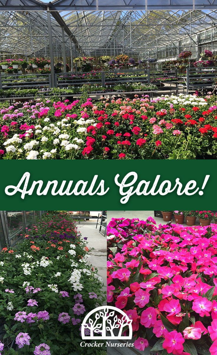 Annuals Cape Cod - Crocker Nurseries