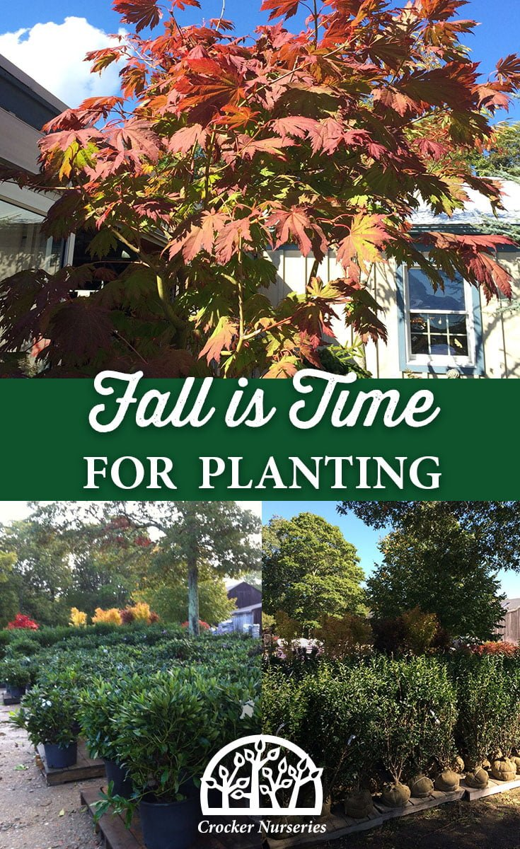 Fall is Time for Planting - Crocker Nurseries